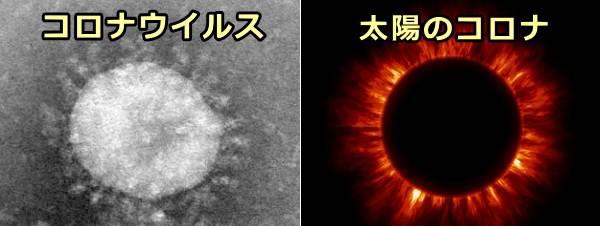 コロナウイルスのスパイクタンパクと太陽の放つコロ... 犬のコロナウイルス性腸炎~症状・原因から