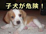 犬の回虫症~症状・原因から治療...
