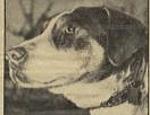 野良犬だったフィドは、レンガ職人カルロ・サリアーニに拾われた