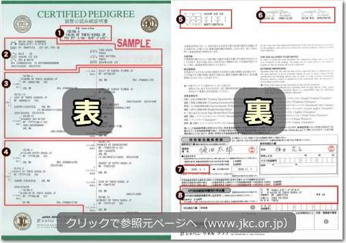 JKC発行の血統証明書サンプル画像