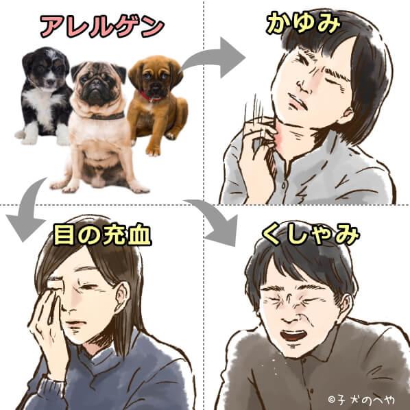 犬アレルギー 完全ガイド 症状 原因から検査 治療法まで 子犬のへや