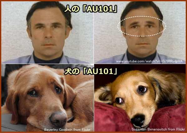 人と犬が見せる「AU101」(物憂げ顔)の表情