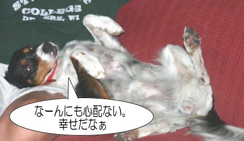 犬 お腹見せて寝る