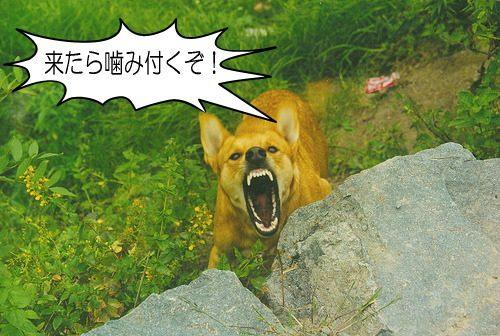 犬が歯をむき出す