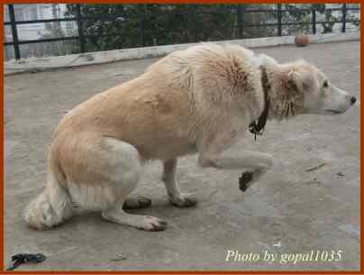 犬の姿勢から心を読む訓練~重心...