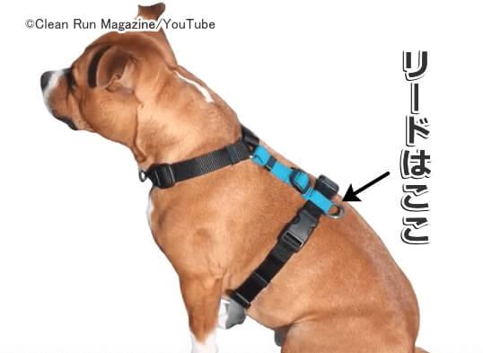 付け方 ハーネス 犬のハーネスの付け方!初心者でもわかる写真解説