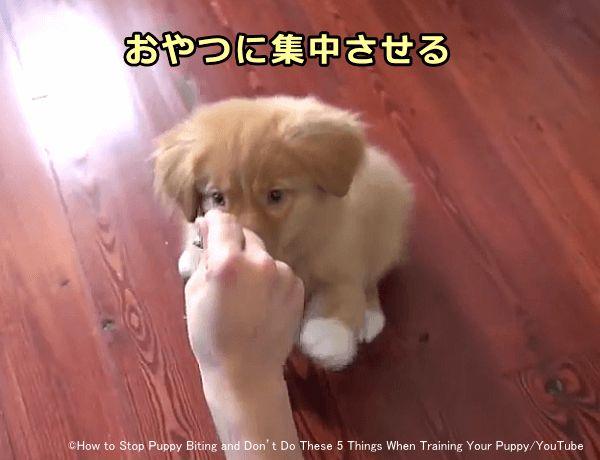 子犬 の 噛み 癖 直し 方