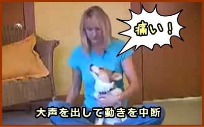 犬が噛んできた瞬間に大声を出して攻撃抑制、および定位反射を引き起こす