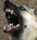 犬が噛みつき行動を見せる要因や状況は実に様々