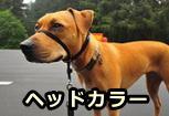 犬の引っ張り防止アイテム「ヘッドカラー」