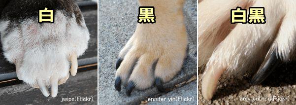 切り た すぎ 爪 の 犬