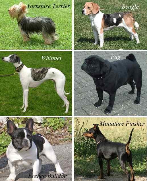の 種類 一覧 犬